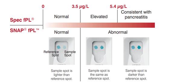 貓胰臟炎檢查fPL