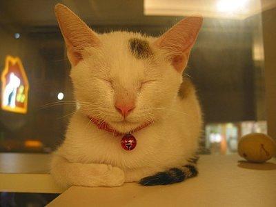 招財貓睡覺篇
