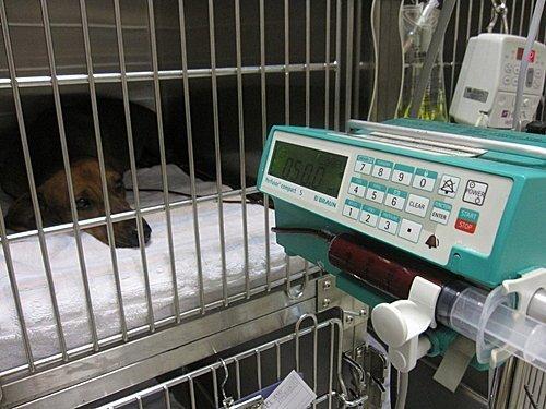 敦品動物醫院帶您–認識焦蟲(上)