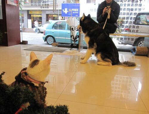 納妮亞也可以和大狗狗當好朋友喔 ! ! !