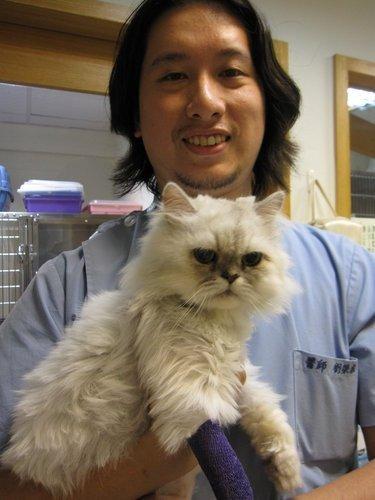 認識貓咪糖尿病@敦品動物醫院