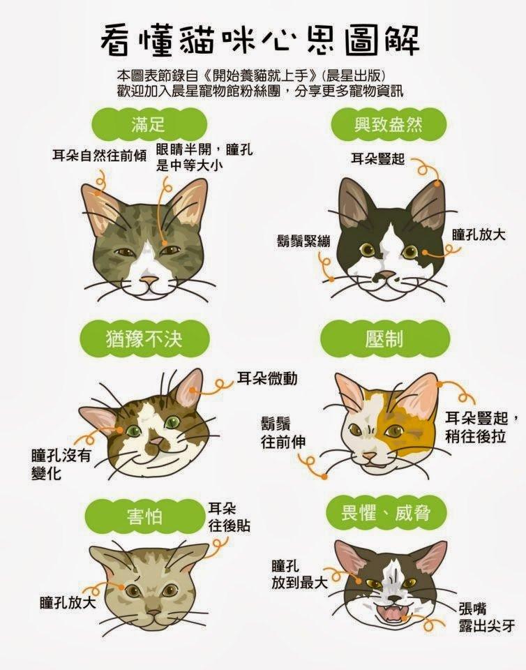 貓咪的心思圖解