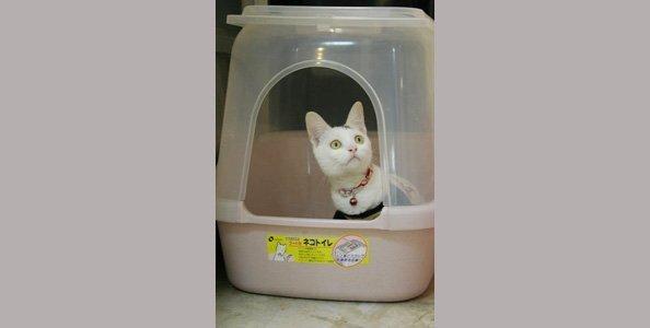 敦品動物醫院告訴你為什麼有時候貓咪會亂尿尿