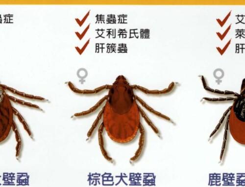 【狗壁蝨 / 狗傳染病】 Tick :帶你認識恐怖的狗狗殺手!