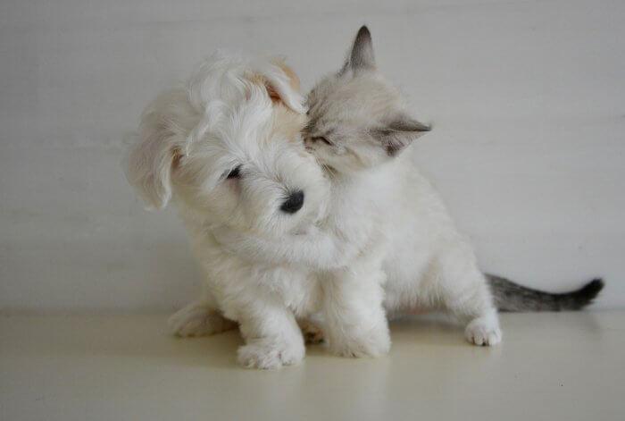 狗狗與貓咪
