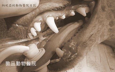 【狗狗洗牙】專業氣體麻醉洗牙完整介紹, 本院獲蘋果日報專文報導