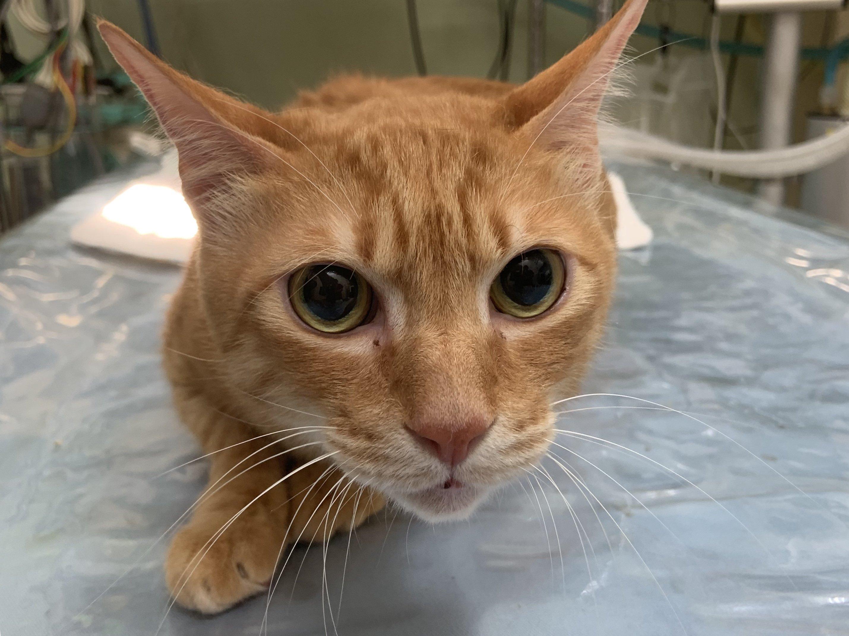 【狗貓氣體麻醉】完整氣體麻醉的介紹與手術生理監控