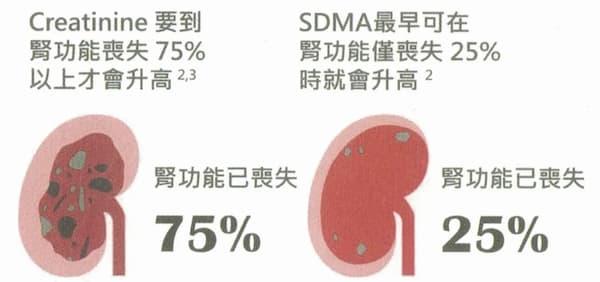 SDMA腎功能喪失圖
